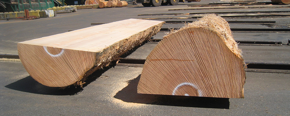 Douglas fir wood species from BC Canada